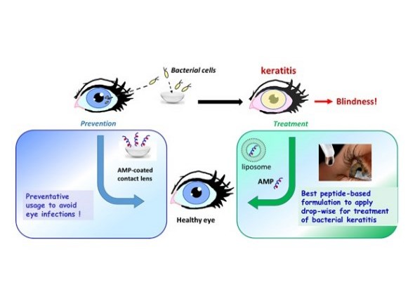 treatment of bacterial keratitis